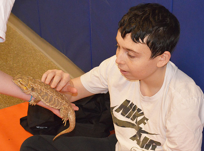 Student pets baby alligator